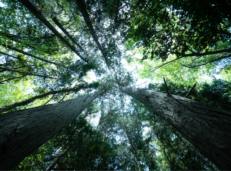 島田市の注文住宅・新築一戸建て・リフォームで使うのは地元大井川流域産の木
